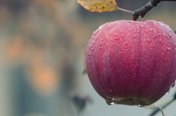 Comment éviter les vers dans les pommes ?