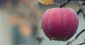 Comment éviter les vers dans les pommes