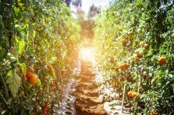 Apprendre à cultiver un jardin en permaculture