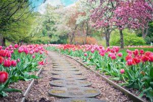 Les raisons d'utiliser du marc de café dans votre jardin